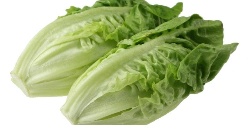 CDC: stay away from romaine lettuce