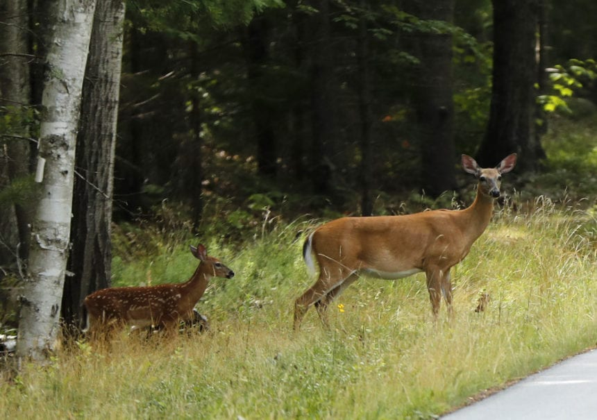 State offers new license for bait hunting deer and pigs