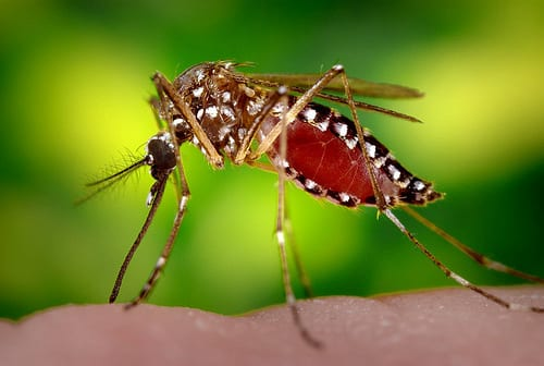 Auburn researchers find Zika-spreading mosquito species in state
