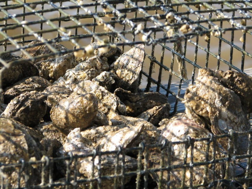 Alabama allows early start to oyster harvest on Monday