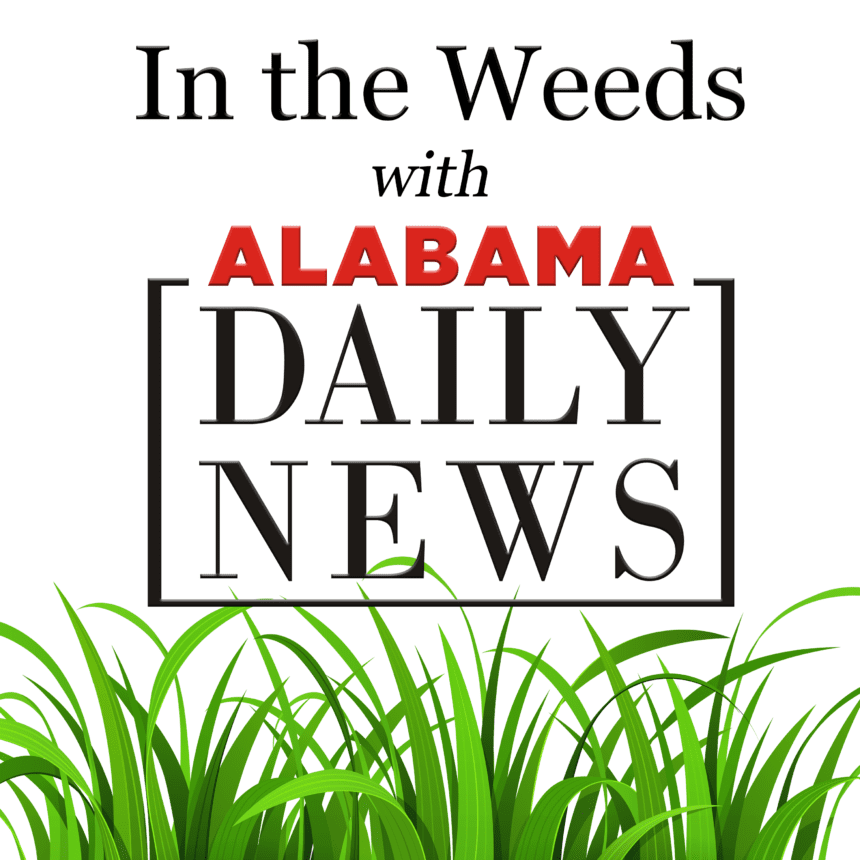 Introducing In the Weeds, an Alabama Daily News podcast