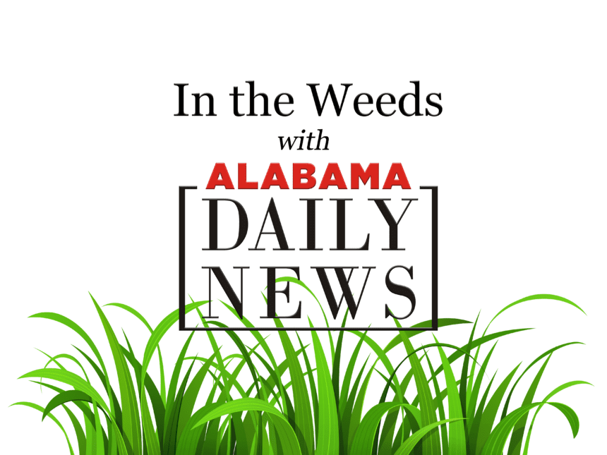 In the Weeds w/ Rep. Martha Roby