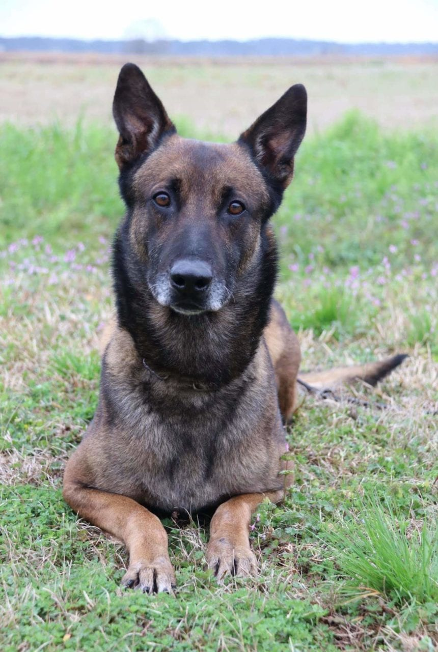 Jake, the police dog that sniffed drugs during prison search, dies