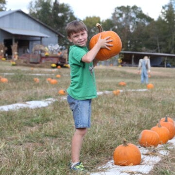 Agritourism businesses hopeful for a bump in attendance this fall
